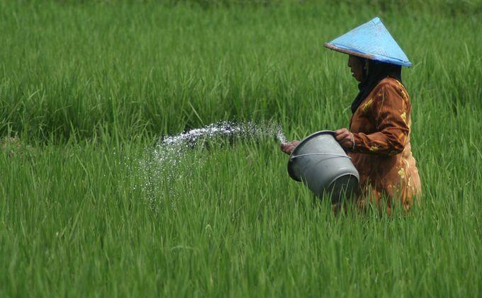 Pemkab Jamin Stok Pupuk di Bolmong Aman