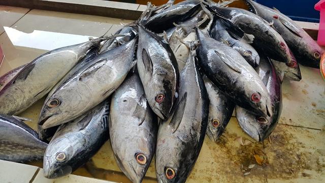 Setiap Tahun Boltim Produksi 3.2 Ton Ikan