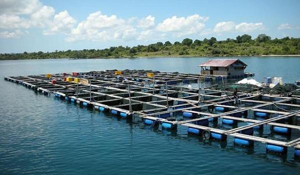 Nelayan di Tiga Desa Dapat Bantuan Keramba Jaring Apung