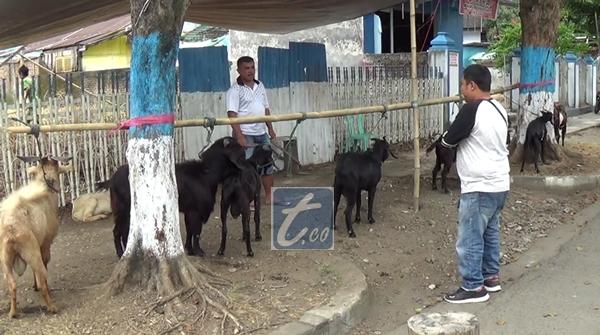 Penjual Hewan Kurban Ramai Bermunculan di Kotamobagu