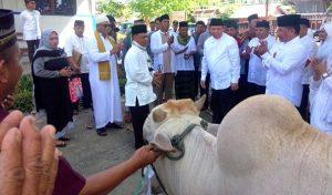 Bupati menyerahkan hewan Qurban kepada panitia PHBI