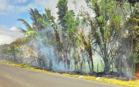 Kebakaran lahan perkebunan yang terjadi di jalan trans Sulawesi beberapa waktu lalu
