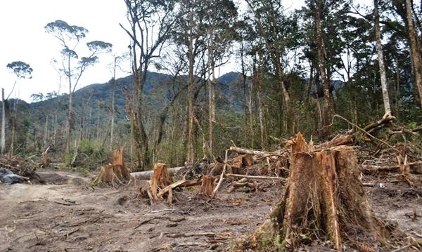 Salah satu contoh aksi perambahan hutan. (foto google)