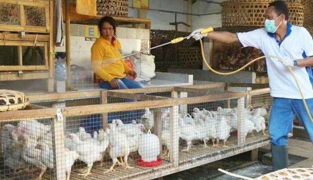 Bolmong Sementara Masih Aman Kasus Flu Burung