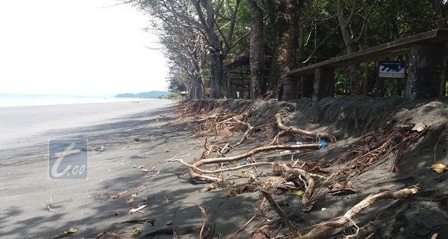 Abrasi Mulai Kikis Pantai Wisata Bungin