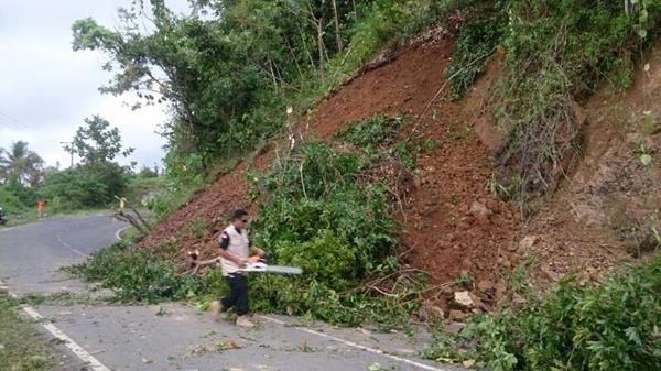 Jalur Trans Sulawesi Longsor Disertai Pohon Tumbang