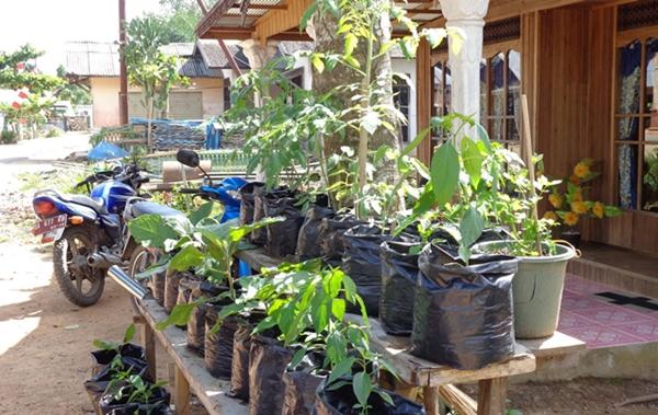 Program Kawasan Rumah Pangan Lestari di Bolmong Mulai April Ini
