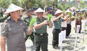 Bupati Salihi saat tanam padi bersama dengan TNI