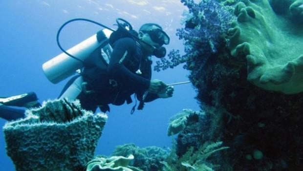Raja Ampat dan Komodo Dinobatkan Destinasi Snorkeling Terbaik Dunia