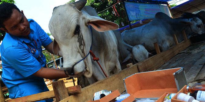 Waspada, ratusan hewan kurban dijual di Depok banyak yang sakit