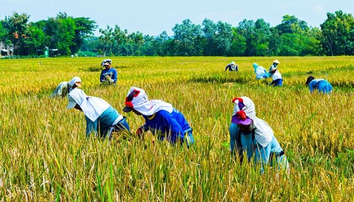 Potensi Pertanian dan Peternakan Masih Jadi Andalan di Kota Kotamobagu