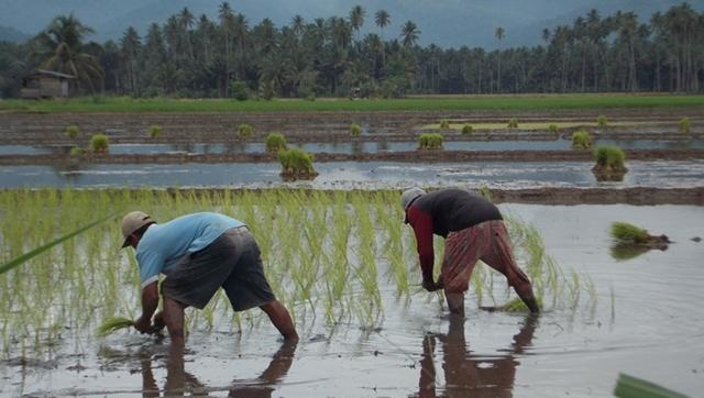 Petani di Kabupaten Bolmong Mengeluh Pupuk Mulai Langkah