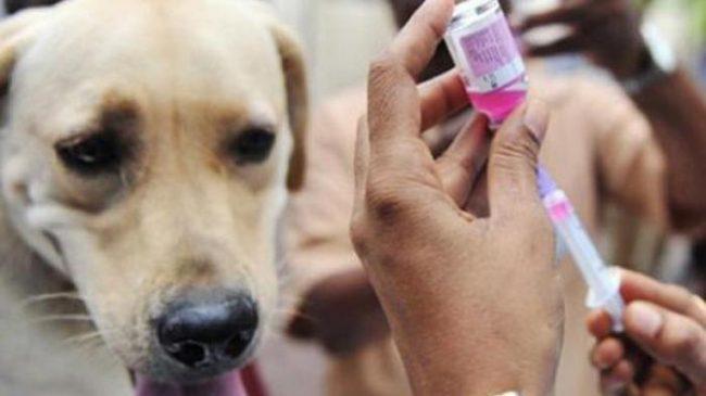 Vaksin Rabies di Dinas Peternakan Boltim Kadaluarsa